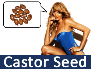 ncdex-commodity-castor-seed